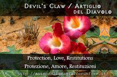 Devil's Claw: Protection, Love, Restitutions // Artiglio del Diavolo: Protezione, Amore, Restituzioni | L'Antro della Magia http://antrodellamagia.forumfree.it/?t=66193837