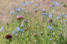 Meadow Flowers, Wild Flowers, Free Pictures, Free Images, Landscape, Illustration, Nature, Plants, Modern Gardens