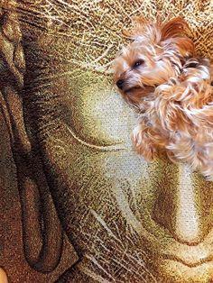 My Buddha Blanket ha