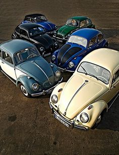 six vw beetle