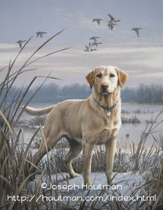 """Labrador retrievers, or """"Labs"""" as they've become fondly known, are one of the most popular dog breeds of our time. Labrador Retrievers, Labrador Puppies, Retriever Puppies, Corgi Puppies, Hunting Art, Hunting Dogs, Waterfowl Hunting, Dog Paintings, Wildlife Art"""
