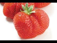 BEGIN Japanology - Yummy Strawberries オランダイチゴ属