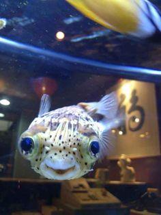 LOOKIT THIS FISH!