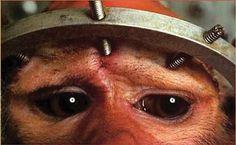 ARM & HAMMER (CHURCH & DWIGHT); Stop selling products tested on animals. Petition · que la société ARM & HAMMER (CHURCH & DWIGHT) P.O. BOX 1625 800-524-1328 WWW.ARMHAMMER.COM HORSHAM, PENNSYLVANIA 19044-6625 stop la vente de produits issue de l'expérimentation animal !! · Change.org