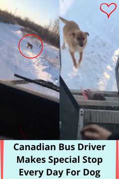 #Canadian #Bus #Driver #Special #Stop #Every #Day #Dog