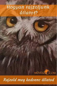 Hogyan rajzoljunk állatot? - Rajzold meg kedvenced könnyedén - Nézd meg hogyan! - Kattints a linkre! Owl, Bird, Painting, Animals, Animales, Animaux, Owls, Birds, Painting Art