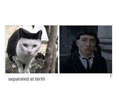the cat looks evil. But Credence isn't really a bad guy.