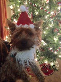 Kyle goal in life is to be Santa Claus! Hamilton Veterinary Hospital - Veterinarian In Trenton, NJ USA :: Current Contest