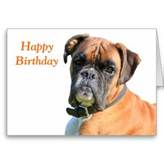 Boxer dog custom birthday card.  Beautiful photo portrait.  Change or delete text to suit requirements or leave as is