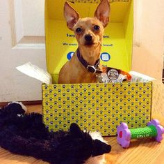 Surprise your pet each month with a box full of products and presents from SURPRISE MY PET. Proceeds help support other animals in need!