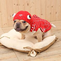 Padrão Goldfish 3D Cute Funny capuz para Cães (XS-XL) – BRL R$ 37,31