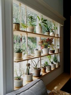 Hanging Plant Shelves – The Artful Roost Hanging Plant Shelves – The Artful Roost Plantas Indoor, Diy Hanging Shelves, Plants On Shelves, Indoor Plant Shelves, Ceiling Hanging, Window Shelf For Plants, Hanging Plant Diy, Hanging Plants On Fence, Kitchen Window Shelves