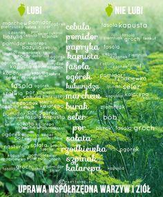 Planowanie ogródka warzywnego   PART THYME
