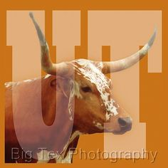 University of Texas Longhorns 5x5 Print on by bigtexphotos on Etsy