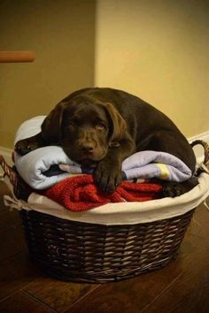 Awww....I love puppies