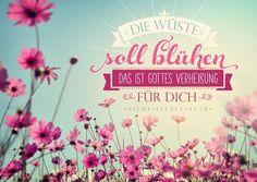 Format 14,8 x 10,5 cm    Text:   Die Wüste soll blühen.  Das ist Gottes Verheißung für dich.  Jesaja 41,18