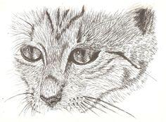 Inwazja kotów | Ubierz grafikę!