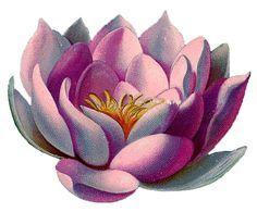 Water Lily Tattoos on Pinterest | Larkspur Tattoo Lilies Tattoo and ...