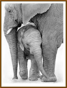 Mother Elephant And Baby Drawing by Dean Cannon Mother And Baby Elephant, Elephant Love, Elephant Art, African Elephant, African Animals, Elephant Family, Elephants Photos, Save The Elephants, Baby Elephants