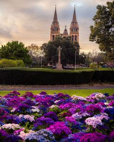 South Australia, Tower, Bloom, City, Spring, Travel, Beautiful, Instagram, Rook