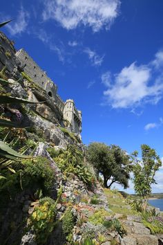 Sub-tropical gardens at St Michael's Mount #Cornwall Pic by Rebecca Bentley https://www.pinterest.com/sowildandfree/