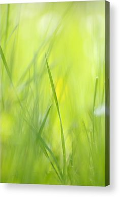 Green spring meadow Acrylic Print for sale. Soft and bright image with a warm spring / summer feeling. The image gets printed directly onto the back of a sheet of clear acrylic. The image is the art - it doesn't get any cleaner than that! Matthias Hauser - Art for your Home Decor and Interior Design.