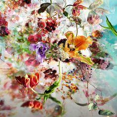 isabelle menin | Isabelle Menin, esplosioni di fiori in digitale • Fotoritocco