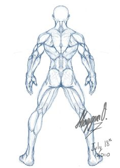 Male Anatomy Template: Back by Shintenzu.deviantart.com on @deviantART