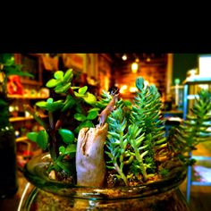 Miniature deer leaping over succulents
