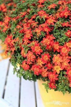 Heat Tolerant Plants That Love The Sun And Drought Pinterest Garden