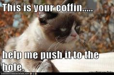 the daily grump Grumpy Cat Quotes, Grumpy Cat Meme, Funny Cat Memes, Funny Cats, Funny Animals, Grumpy Kitty, Animal Funnies, Hilarious, Here Kitty Kitty