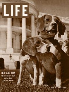 Life - President Johnson's Beagles 1964