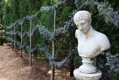Blue Atlas Cedar espalier/living fence by Scott Hostetler