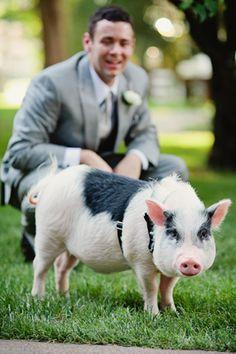 think animal farm