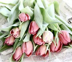 Cómo plantar tulipanes, cuidar tulipanes y decorar con tulipanes: una maravillosa flor muy decorativa y con historia | https://conkansei.com/es/blog/post/decorar-con-tulipanes