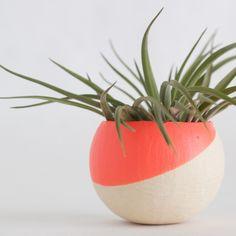 air plant pod in melon