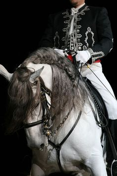 Lusitano Horse from Portugal All The Pretty Horses, Beautiful Horses, Animals Beautiful, Dressage, Horse Braiding, Andalusian Horse, Majestic Horse, White Horses, Horse Pictures