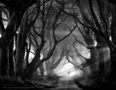 "The Other Side by Stephen Emerson. ""One from the ""Dark Hedges"" which is an avenue of old beech trees in Co Antrim, N Ireland. Haunted by the ""Grey Lady"" believed to be a tormented soul she is said by the locals to appear at dusk among these trees."""