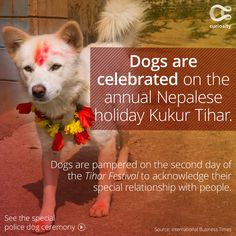 The Tihar Festival is a five-day Hindu festival celebrated in Nepal. The second day of this annual fall celebration is called Kukur Tihar, and is dedicated solely to the celebration and pampering of canines for their cherished relationship with humans. On this day, dogs are decorate with colorful dyes and garlands, fed tasty treats, and police dogs are honored with special ceremonies for their services.  Click above to learn more!