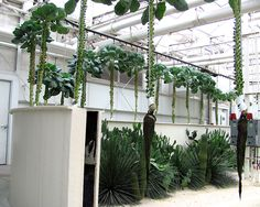 Living With The Land : Disney World Resort Disney World Vacation, Disney World Resorts, Hydroponic Gardening, Hydroponics, Plants, Plant, Planets, Aquaponics