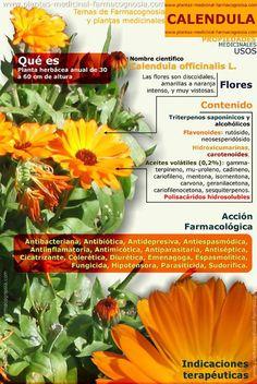 Descubre los sorprendentes beneficios de la Caléndula, una bonita flor presente en muchos jardines por su belleza, que también posee propiedades medicinales