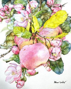 (15) Home / Twitter Watercolor And Ink, Watercolor Paintings, Watercolors, Apricot Blossom, Still Life Art, Aquaman, Artist Painting, Flower Art, Aquarium