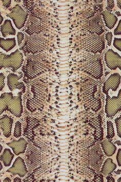Snake Skin. #awesome See Top 10 #image Seashell #Kindlecase, Click to http://www.zazzle.com/cuteiphone6cases/gifts?cg=196670363387004095&rf=238478323816001889&tc=repin
