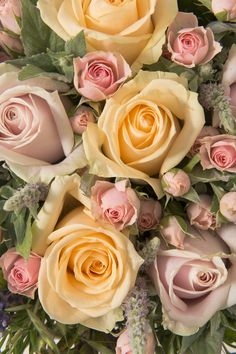 Yellow flowers commonly evoke feelings of happiness and cheer, which is exactly what they symbolize. Flowers For You, Love Rose, Pretty Flowers, Colorful Flowers, Yellow Flowers Names, Yellow Roses, Romantic Roses, Beautiful Roses, Rose Pictures