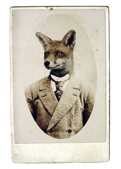 Meet Nicolas Foxworth II. Noble pet, excellent hunter and even better Society member impersonator. #greypoupon