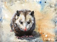 Virginia Opossum by Alexa Carson