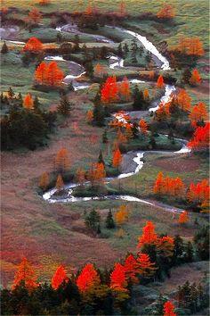 Yoshigadaira High Moor - Gunma, Japan - Orange trees
