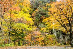 ทัวร์ญี่ปุ่น ใบไม้เปลี่ยนสี 2558 | AUTUMN JAPAN 2015 | เที่ยวญี่ปุ่นใบไม้เปลี่ยนสี หมู่บ้านมรดกโลก ชิราควาโกะ คามิโคจิ 6 วัน 4 คืน (บินTG)  ชมความงามของใบไม้เปลี่ยนสีหมู่บ้านมรดกโลกชิราคาวาโกะและคามิโคจิ (มงกุฏอัญมณีแห่งเทือกเขาแอลป์ญี่ปุ่น) | ชมปราสาทนาโงย่า |ปราสาทอีกามัตสึโมโตะ|ภูเขาไฟฟูจิโอชิโนะ ฮัคไคทะเลสาบคาวาคูชิ|ปิดท้ายที่โตเกียวเที่ยววัดอาซากุสะ ช้อปปิ้งชินจูกุ ช้อปปิ้งละลายเงินเยนที่อิออน|แช่ออนเซ็น 2 คืน | เดินทางวันที่ 22-27 ตุลาคม 2558 | บิน TG | ราคาท่านละ 69,900 บาท