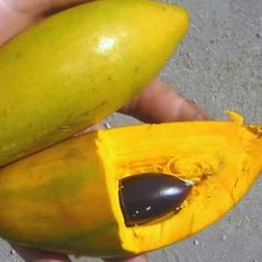 Chesas (Lucuma) fruit from the Philippines