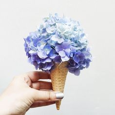 """What's your favorite flavor of hydrangea? Floral Flowers, Beautiful Flowers, Ice Cream Theme, Blue Hydrangea, Hydrangeas, Deco Table, Flower Arrangements, Instagram, Creative"